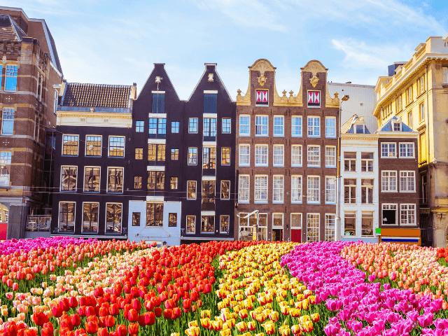 city amstredam tulips and nice buildings